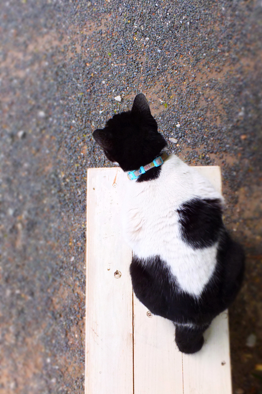 白いベンチで佇むネコ