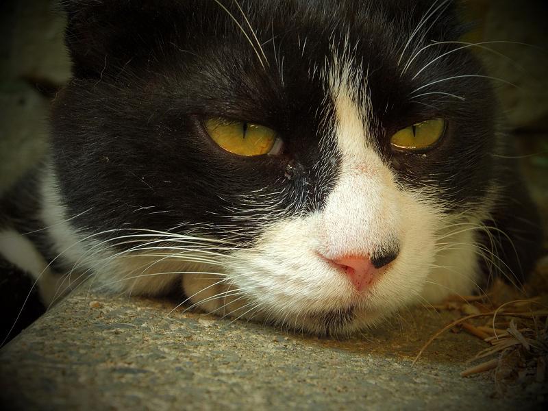 休憩中のネコのアップ
