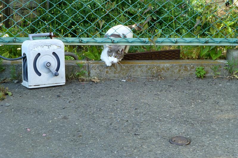 金網の隙間を潜るネコ