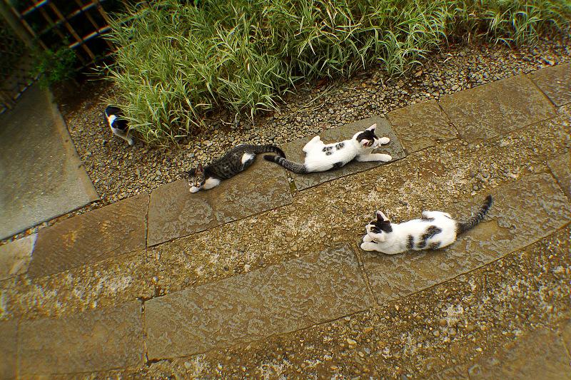 仔猫たち4匹