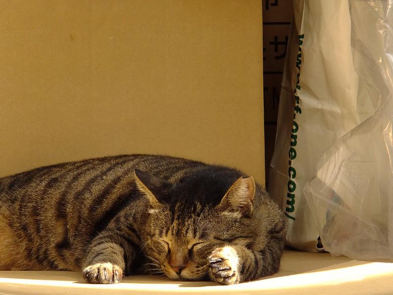 朝日と寝てるネコ