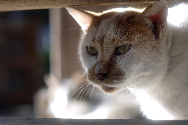 欄干の間から顔を出すネコ