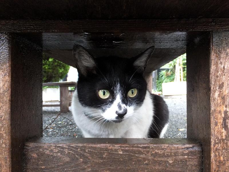 ベンチで雨宿りするネコ
