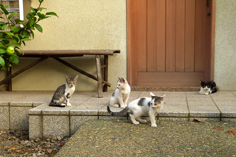 玄関前の仔猫4匹