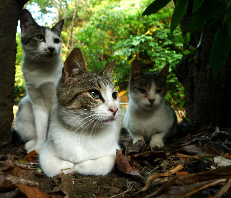 落ち葉の上の三者三様のネコ