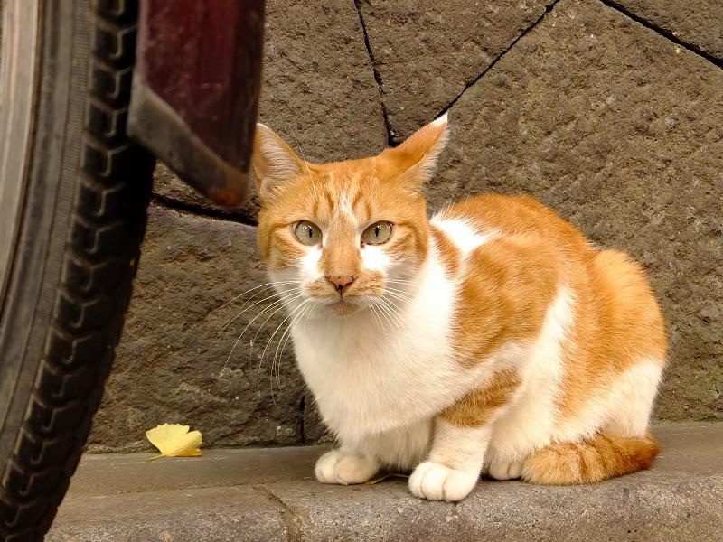 カメラをビックリ顔で見てるネコ