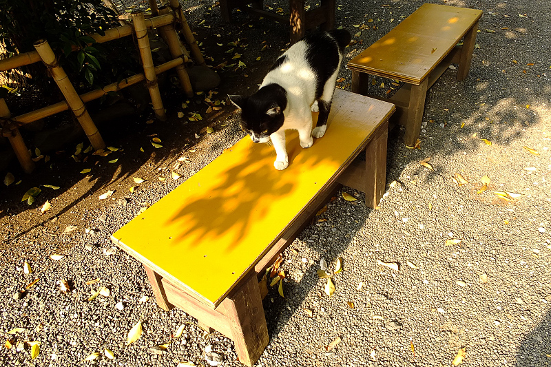 並んでるベンチに乗るネコ