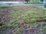 雑草しか植わってません
