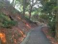 道後公園に夕陽3