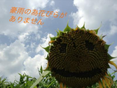 image_20130821003435224.jpg