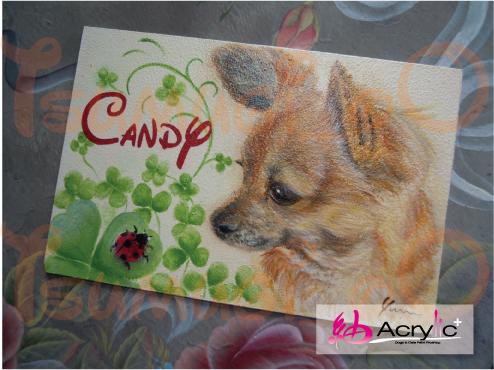 キャンディーちゃん003