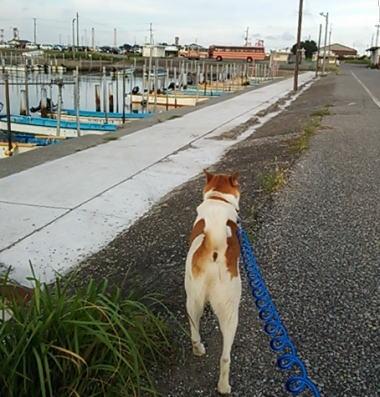 海岸の駐車場はほぼ満車