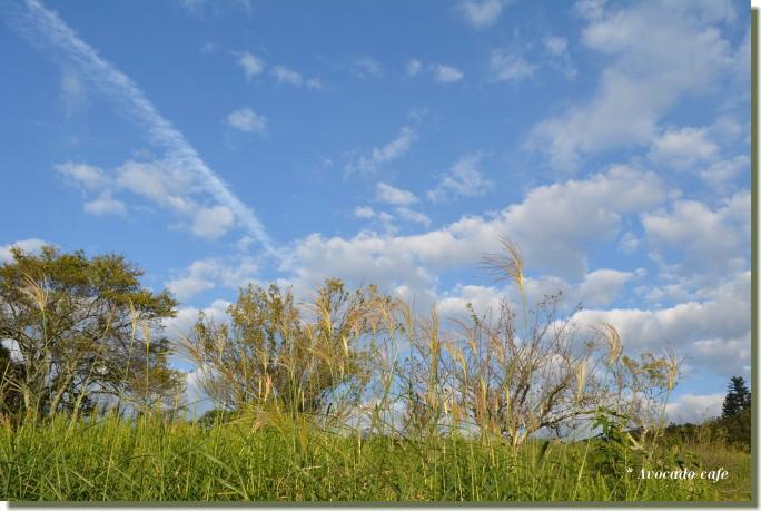 飛行機雲と芒