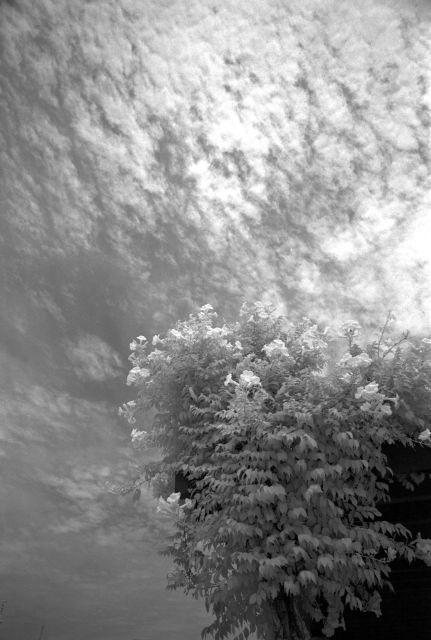 白い夏01f