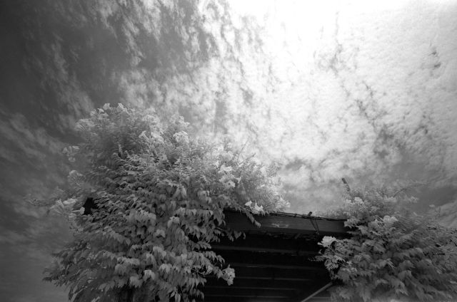 白い夏01d