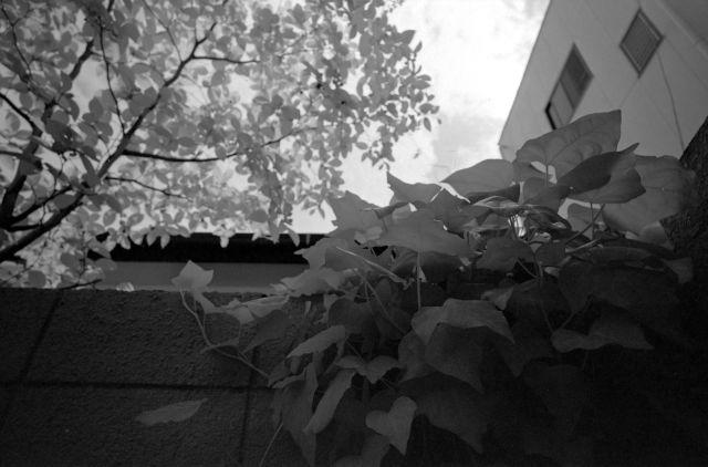 白い夏05a