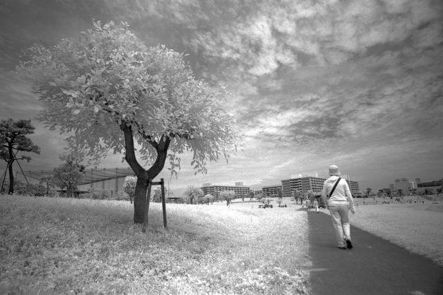 白い夏02a