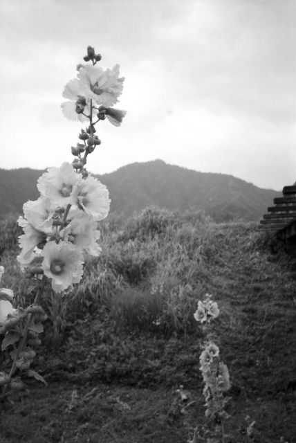 深山幽谷31c