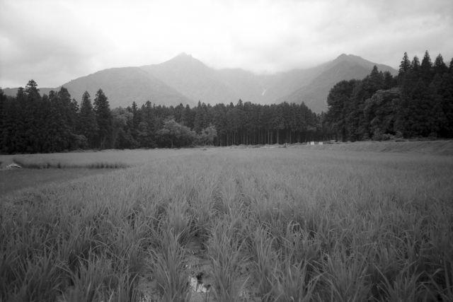 深山幽谷31a