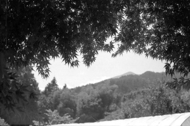 伊那の風景2013夏01a