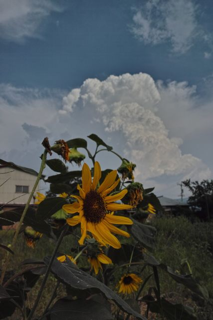 伊那の風景2013夏20a