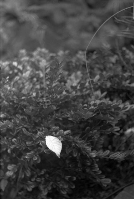 秋深し2013-01a