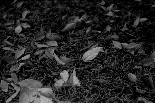 秋深し2013-02a