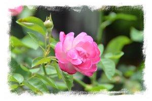 綺麗なお花があちこちに・・・
