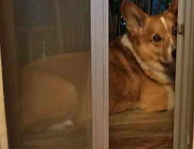 夜の番犬4