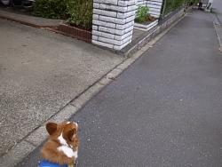 散歩お見送り2