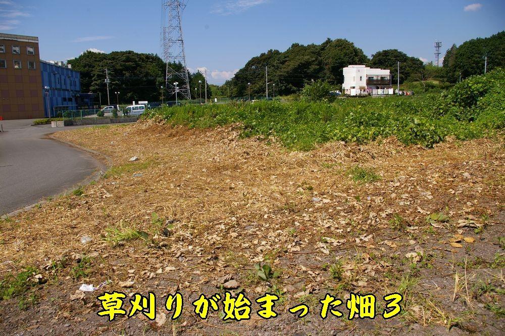 1hatake30916c2.jpg