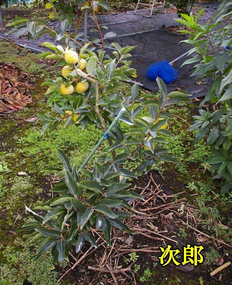 1jiro0919c2.jpg
