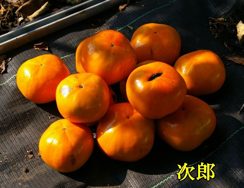 1jiro1018c2.jpg