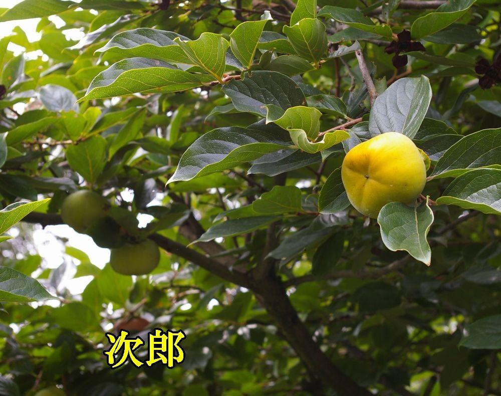 1jirokaki0919c3.jpg