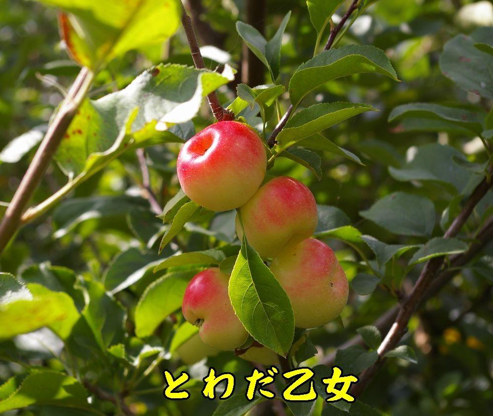 1toeada0915c1.jpg