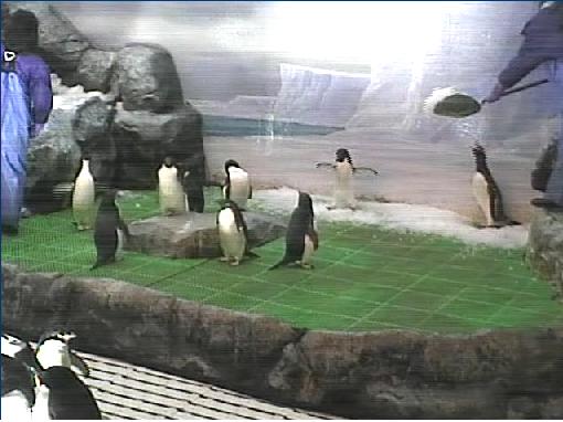 penguin1.png