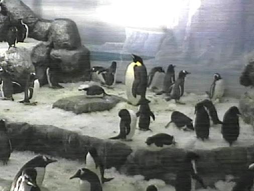 penguin3.png