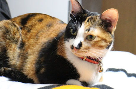 130615_cat02.jpg