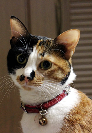 130615_cat04.jpg
