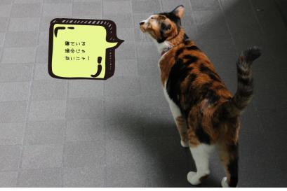 fuji_07.jpg
