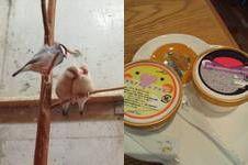 鳥カフェ2