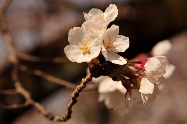 daigoji_130330e.jpg