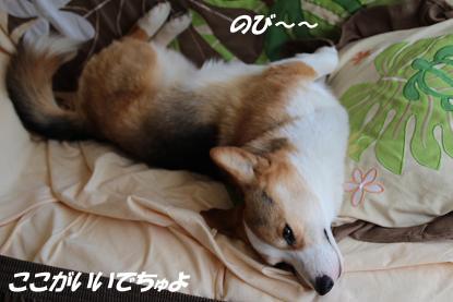 b_4461.jpg