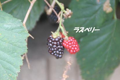 b_6231.jpg