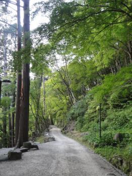 日没前の香嵐渓