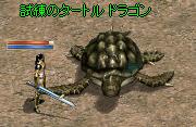 250825 009(ナイト試練亀)
