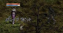 250914 018(うさぎ)