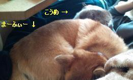 mfy-ume@20130718hittsuki03.jpg