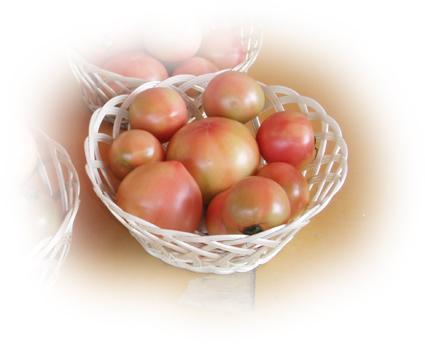 tomato_20131108120733450.jpg