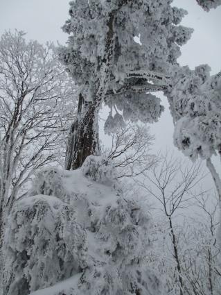 臥龍山スノーハイキング 018